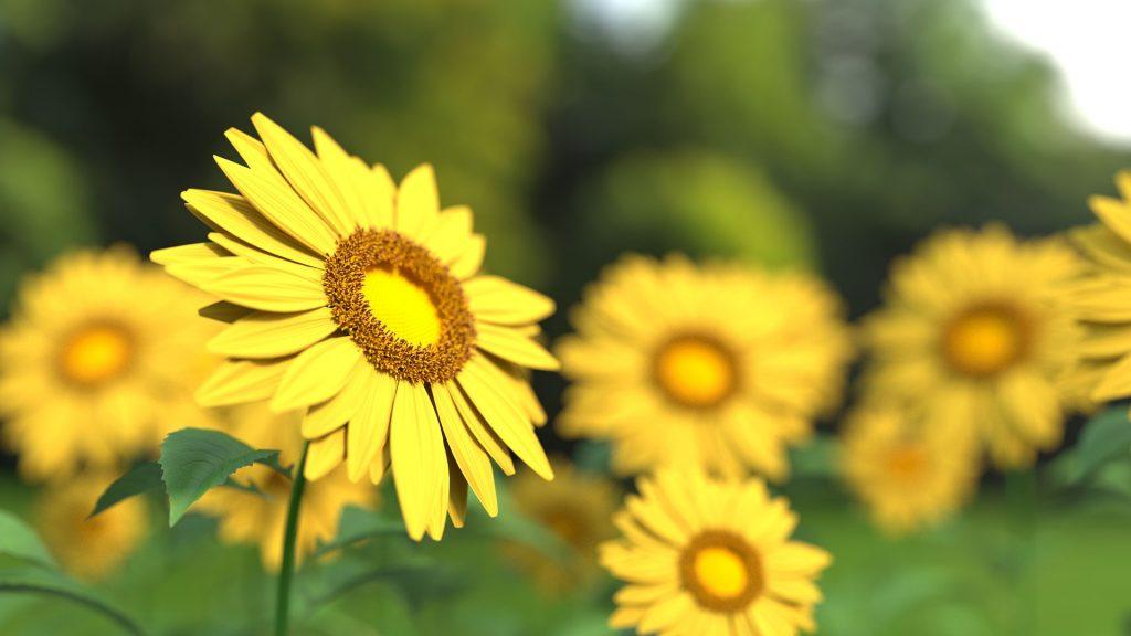 lavidaenamarillo-flores-elcalaixgroc-esudicreati-diseñografico-benissa-marinaalta-alicantesunflower-1421011_1920