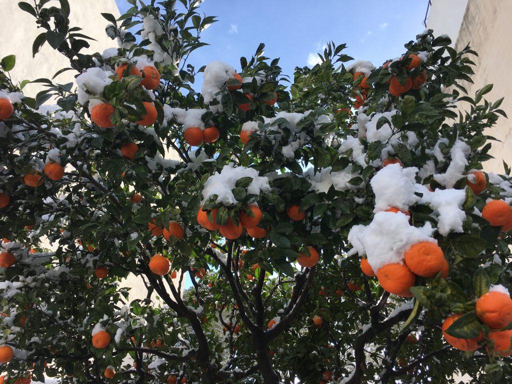 IMG 4184 1024x768 - La nieve en Benissa